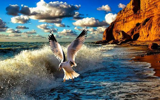 Фото Чайка, летящая над берегом моря на фоне неба и гор, фотограф Игорь Юрьев
