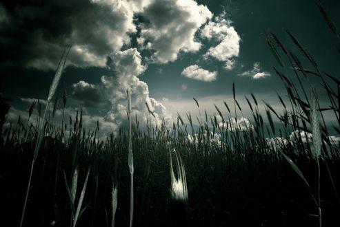 Фото Поле под облачным небом, by KR-2Y-51-3K