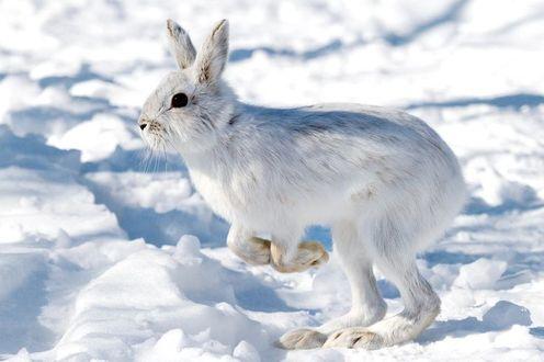 Фото Белый заяц стоит на снегу