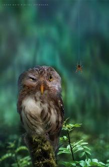 Фото Сова смотрит на паука, by Jasna Matz