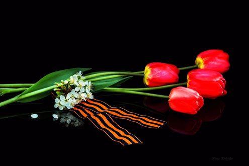 Фото Работа Поклонимся великим тем годам, красные тюльпаны, цветы вишни и Георгиевская ленточка, фотограф Ирина Приходько