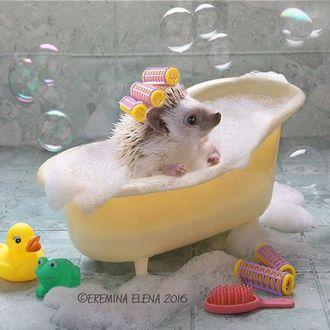 Фото Ежик в бигуди принимает ванну, Elena Eremina 2016