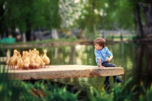 Фото Мальчик сидит около воды смотря на утят, фотограф Анастасия Грошева