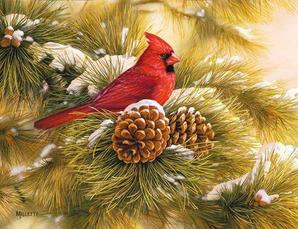 Фото Красный кардинал или виргинский кардинал — вид птиц из семейства кардиналовых, сидит на заснеженной сосновой ветке с шишками, художник Rosemari Millette