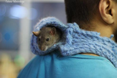Фото Крыса сидит в специальном вязаном домике на шее парня, фотограф Татьяна Ивановская