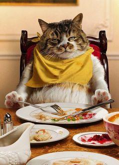 Фото Сытый довольный кот сидит за обеденным столом, над пустой миской, с салфеткой на груди