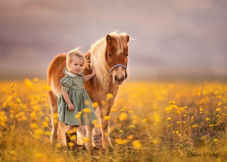 Фото Девочка стоит с пони в поле желтых цветов, by Suzy Mead