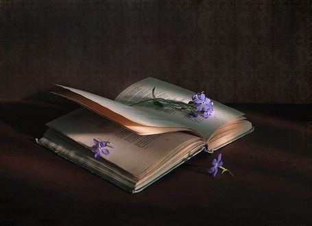 Фото Незабудки на открытой книге, фотограф alla shewchenko
