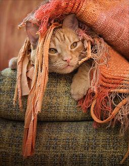 Фото Лежащий под ковриком рыжий кот, by Csyyt