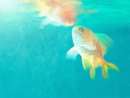 Фото Золотая рыбка под водой, by elenyan