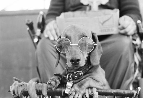 Фото Пес в очках сидит перед своим хозяином, by MITRANDIR