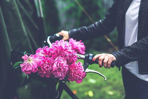 Фото Девушка с букетом розовых пионов в корзине на велосипеде