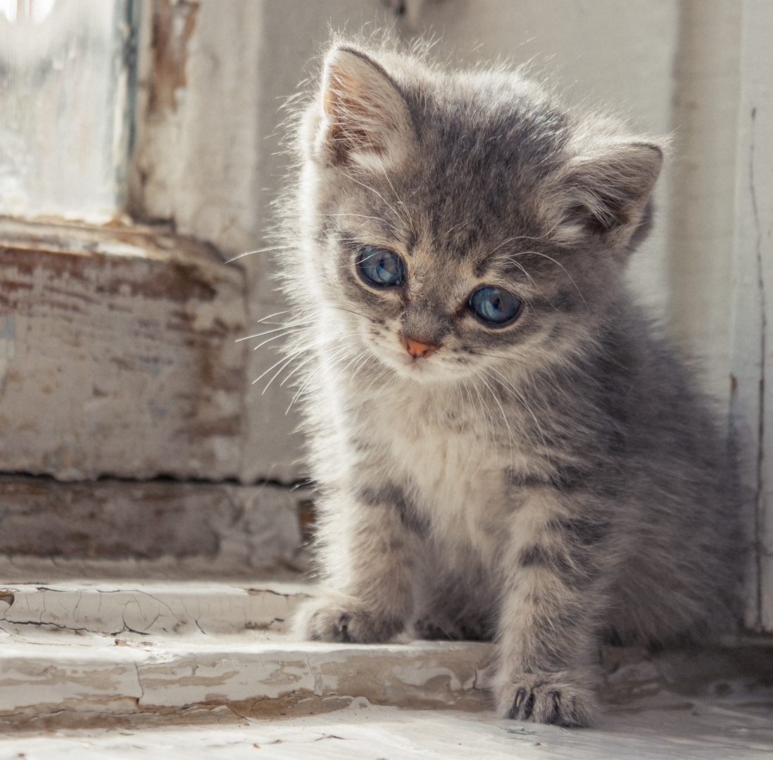 том, фото грустные котята быть, кому-то