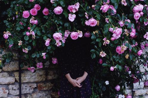 Фото Девушка в розовом кусту, by IrinaJoanne