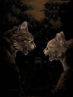 Фото Выяснение отношений между желтоглазой кошкой и зеленоглазой, Коты-воители