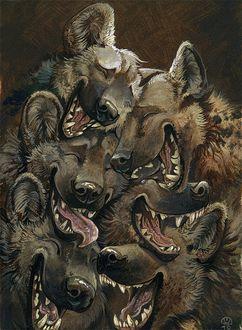 Фото Сбившаяся в кучу стая смеющихся гиен, by Alectorfencer