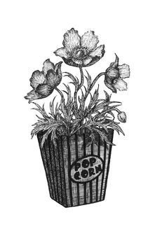 Фото Цветы, растущие из упаковки поп-корна (POP CORN), by Beata Obscura
