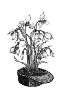 Фото Цветы, растущие из кепки, by Beata Obscura