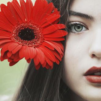Фото Девушка с красной герберой у лица, by thefirebomb