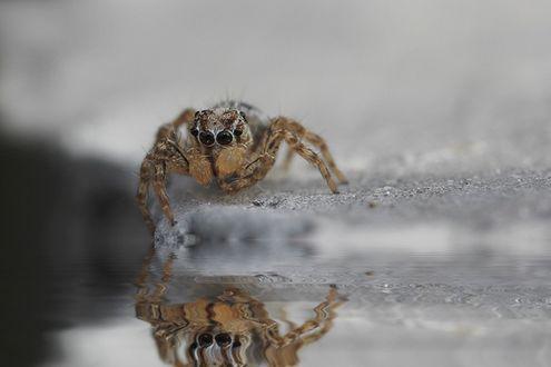 Фото Маленький паук возле воды, фотограф Diens Silver / Динс Сильвер