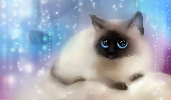 Фото Сиамский котенок с голубыми глазами лежит на белой подушке, by Nneila