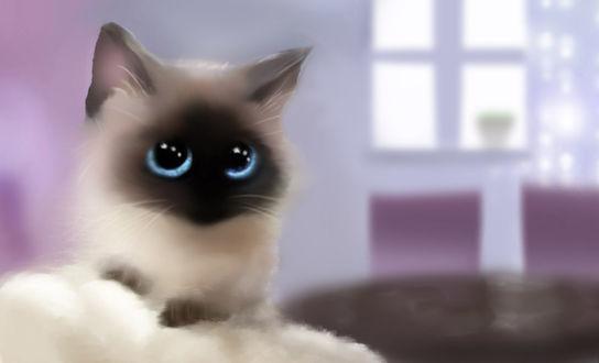 Фото Сиамский котенок с голубыми глазами сидит на белой подушке, by Nneila