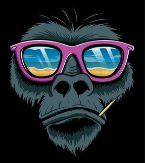 Фото Черная горилла в розовых очках, в которых отражается пляж и море, а так же с зубочисткой во рту
