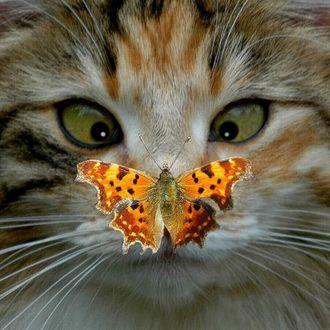 Фото Оранжевая бабочка сидит на носу у кошки