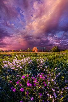 Фото На переднем плане полевые цветы, а вдалеке стоит дом под облачным небом, by Phil Koch