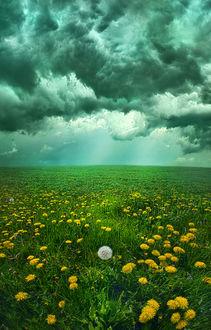 Фото Поле одуванчиков под облачным небом, by Phil Koch