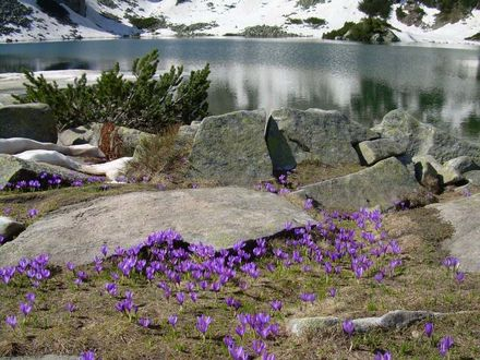 ���� �������� �������� ��������� �������� ����� ����������� ������ �����. ������������ ���� ����� / Nacionalen park Pirin, ��������