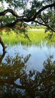 Фото Дерево склонилось перед озером