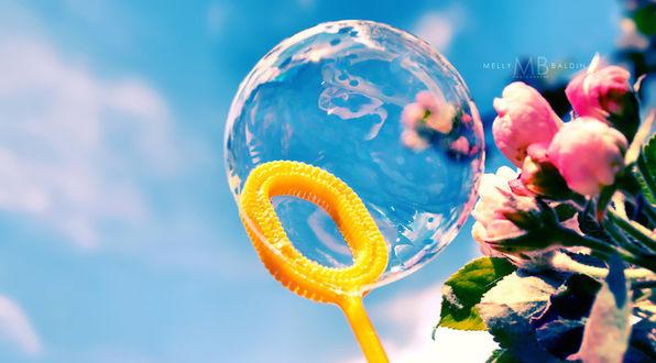 Фото Мыльный пузырь и розовые цветы, by MellyBaldin
