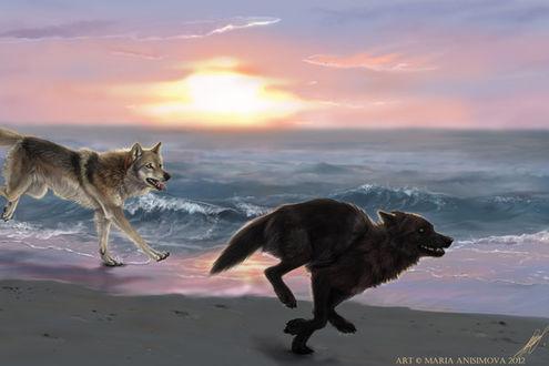 Фото Двое волков бегут по морскому берегу на фоне заката, by Yellow-eyes (Мария Анисимова)
