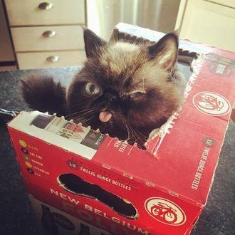 Фото Когда завладел крепостью, и не хочешь никого в нее впускать, кот занял оборону в картонной коробке
