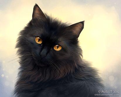 Фото Черная кошка с янтарными глазами, by areot
