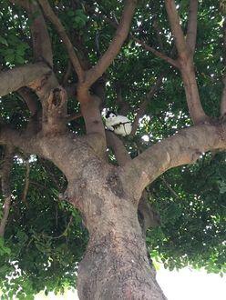 Фото Кот - снайпер сидит на дереве и охотится на мышей