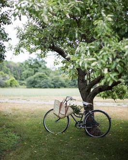 Фото Велосипед, с женской сумкой на нем, стоит у дерева