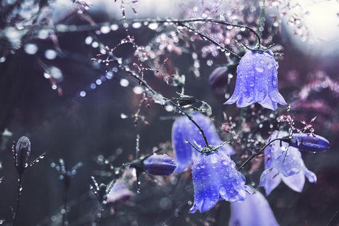 ���� ������� ������������ � ����, by Thunderi