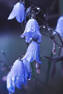 ���� ������� ������������ ����� �����, by Thunderi