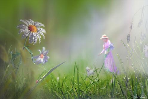 Фото На переднем плане ромашки в каплях росы, далее дама с собачкой на лугу, by Igor Zenin