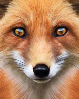 Фото Портрет рыжего лиса крупным планом, by KomodoEmpire