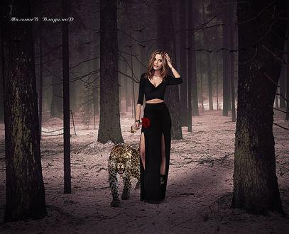 Фото Девушка с розой в руке гуляет в лесу с леопардом