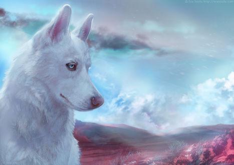 Фото Белая хаски с голубыми глазами на фоне облачного неба, by e-soulu