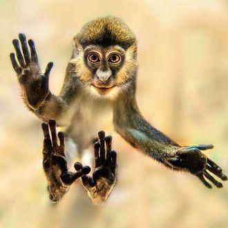 Фото Смешная обезьяна на размытом фоне