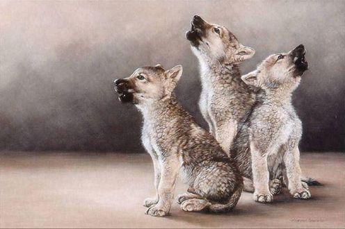 Фото Три маленьких волчонка пытаются выть по - взрослому