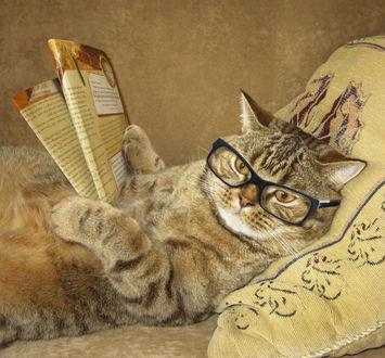 Фото Кот в очках лежит на постели и читает газету, работа И — боже вас сохрани — не читайте до обеда советских газет фотографа Iridi