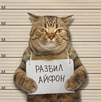 Фото Кот стоит с табличкой на груди (Разбил айфон), работа Оправдать нельзя помиловать фотографа Iridi