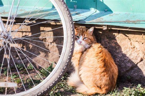 Фото Рыжий кот сидит у велосипедного колеса, фотограф Vova Hleb