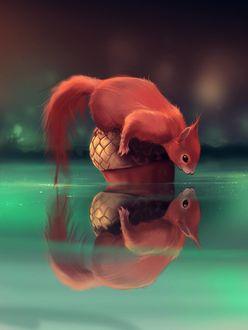 Фото Белка смотрит на свое отражение в воде, by Aquasixio - Cyril ROLANDO